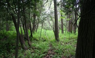 Simmons Nature Preserve